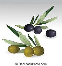 Black and green isolated olives