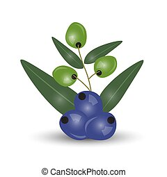 Black and green olives branch isolated on white background. Design for olive oil, cosmetics, health care products.