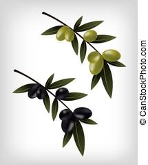Black and green olives illustration