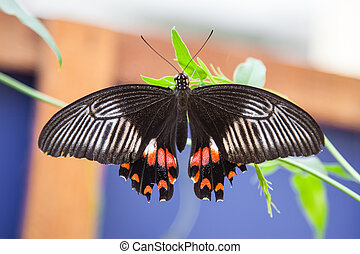 black and orange butterfly on a leaf