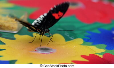 Black and red spotted butterfly on colored board