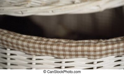 Black and tabby cats peeking out of a wooden basket - Cute...