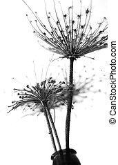 Black and white abstract flower background, soft focus