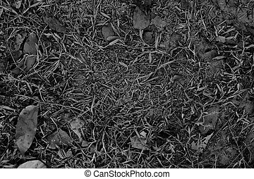 Black and white abstract texture background.