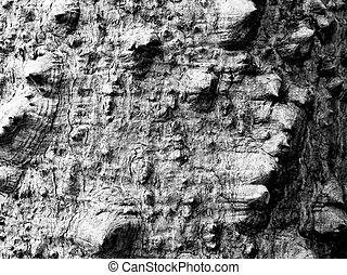 black and white bark of tree monochrome