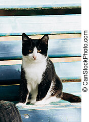 Black and white cat basking in the sun lying on a bench