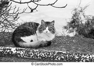 black and white cat in the nature