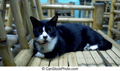 Black and white cat lies on a bamboo chair