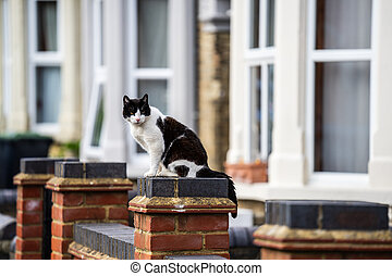 Black and white cat on a brick wall in England.