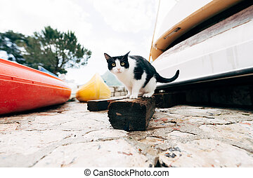 Black and white cat on a wooden board against the background of the boat station.