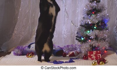 black and white cat playing under a christmas tree