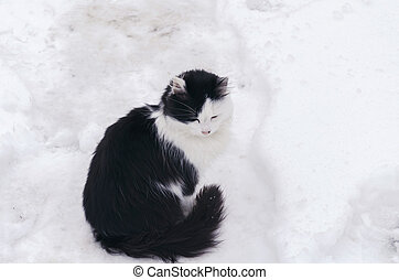 black and white cat sits in the snow