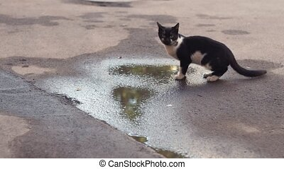 Black and white cat sitting near the puddles on the street