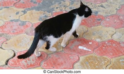 Black and white cat walking and then sits on its back