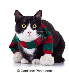 black and white cat wearing winter scarf - cute black and...