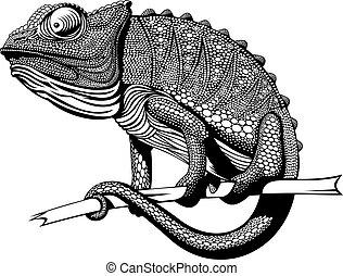 black and white chameleon animal