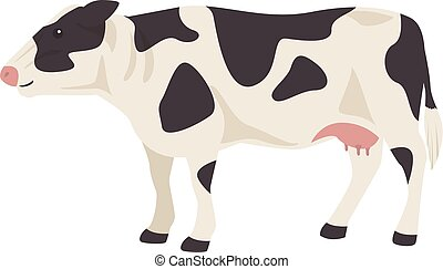 Black and white cow isolated.