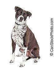 Black and White Dog Sitting Tilting Head