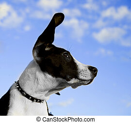 Black and White Dog's Face