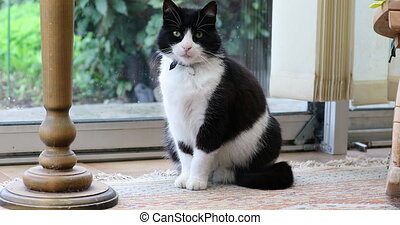 Black And White Domestic Cat Sitting In Front Of A Glass Door