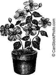 Black and white drawing of flower