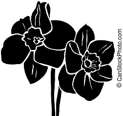 black and white drawing of isolated daffodils
