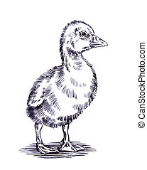 engrave ink draw isolated duck illustration - black and...