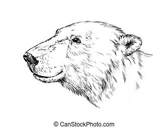black and white engrave isolated bear