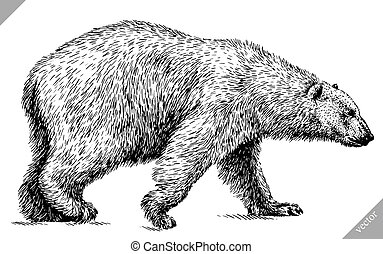 black and white engrave isolated white bear vector illustration