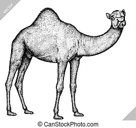 black and white engrave isolated camel art