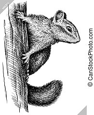 black and white engrave isolated chipmunk vector art