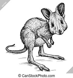 black and white engrave isolated kangaroo vector art