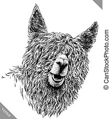 black and white engrave isolated Lama