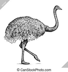 black and white engrave isolated ostrich vector art