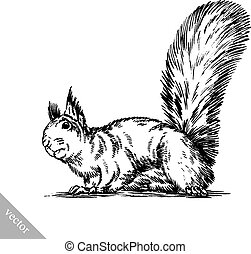 black and white engrave isolated squirrel illustration -...