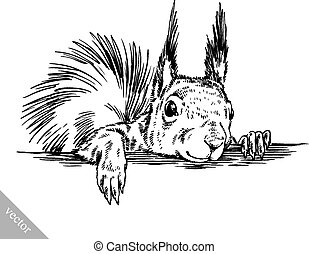 black and white engrave ink draw isolated vector squirrel illustration