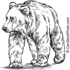 black and white engrave isolated vector bear - black and...