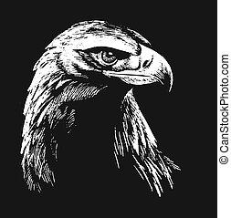 Black and white falcon sketch