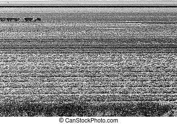 Black and white field