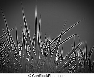 Black and White Grass Background