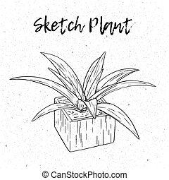 Black and white hand drawn plant in pot. Isolated on a white background