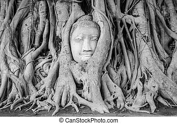 Head of Buddha statue in the tree roots