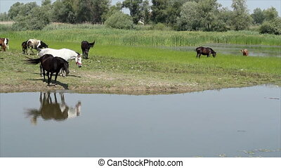 black and white horse on river
