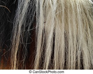 black and white horsehair