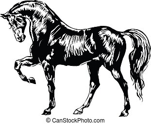 Black and white horse,line art ready for your design work or...