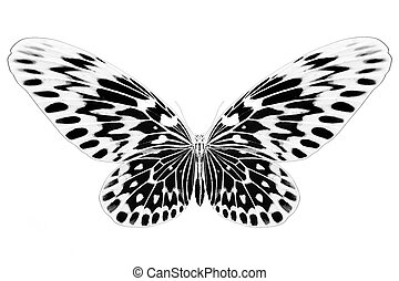 Black and white image of beautiful butterfly with colorful wings