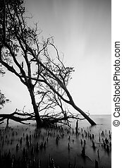 black and white image of mangrove tree on the seashore during low tide water