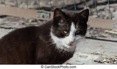 black and white kitten homeless on the street.