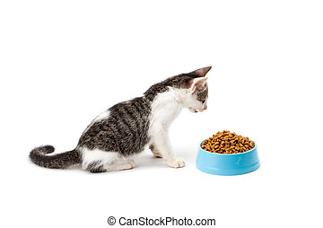 black and white kitten look at pet dried food