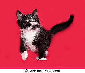 Black and white kitten playing on red